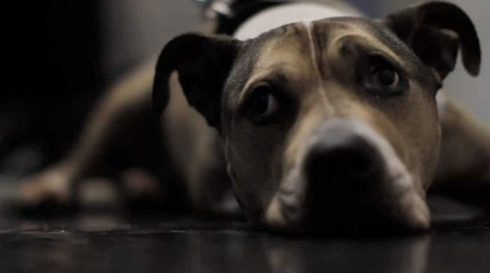 Descubre los últimos minutos de un perro de tres patas que cambió la vida a un ex convicto 10