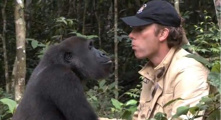 Mira el emocionante reencuentro de un hombre y el gorila al que cuidó como un hijo durante 5 años 1