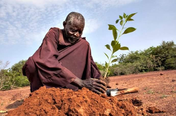 Yacouba Sawadogo frena el avance del desierto
