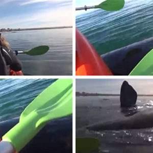 Un kayak es levantado por una ballena en Puerto Madryn. Jamás olvidarán la experiencia 28