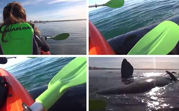 Un kayak es levantado por una ballena en Puerto Madryn. Jamás olvidarán la experiencia 1