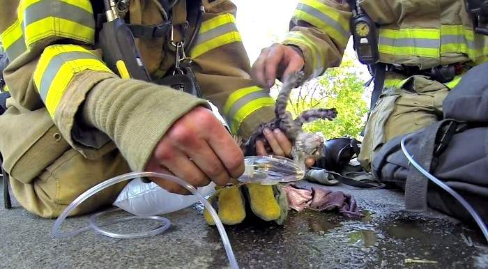 Emocionante rescate de un bebe gato en un incendio. Yo también temblé al ver el final 2