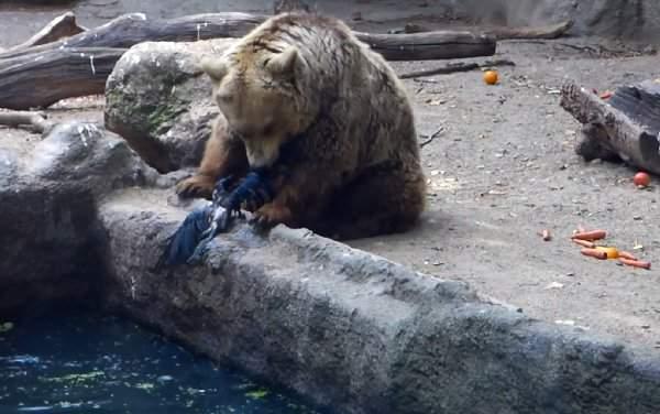Emotivo rescate de un oso a un cuervo atrapado en un estanque del Zoo de Budapest 10