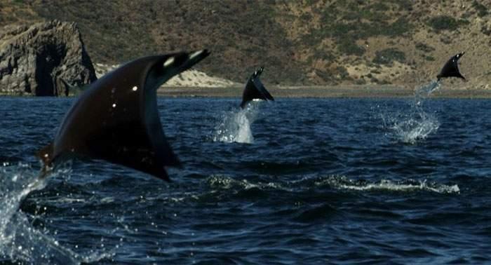 National Geographic logró capturar a estas misteriosas criaturas en un evento único en la historia 16