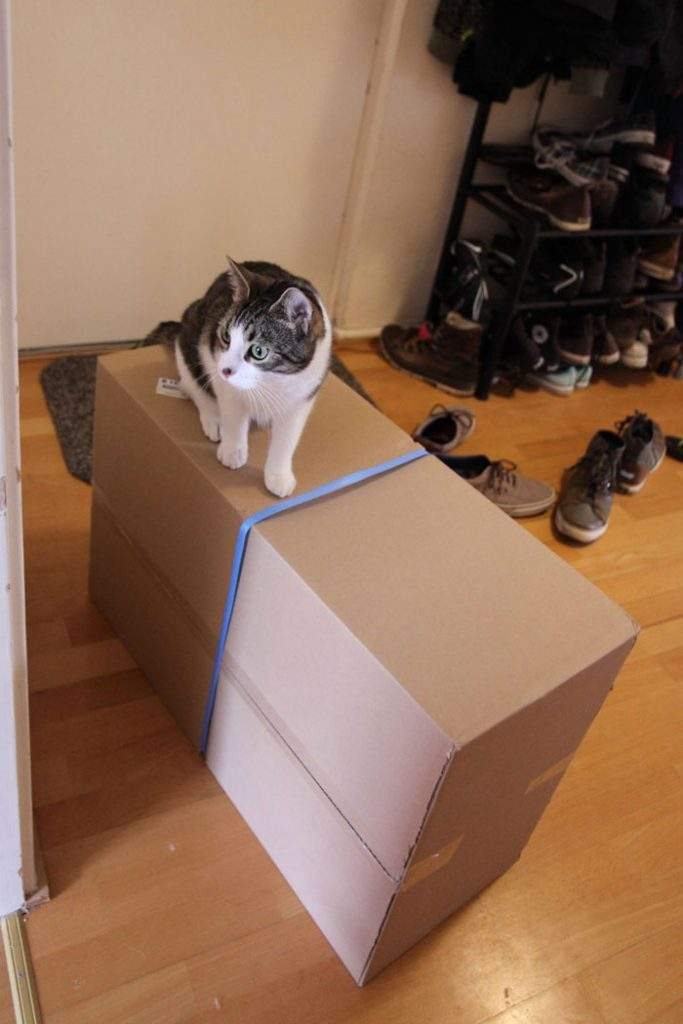 """""""Recogimos la caja en la oficina postal, e incluso Simba estaba emocionada"""""""