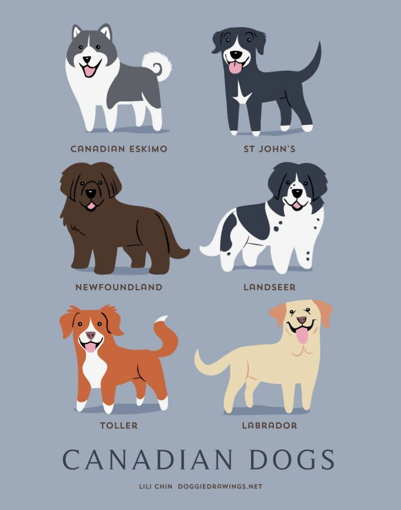 Dogs-Of-The-World-Cute-Poster-Series-Shows-The-Geographic-Origin-Of-Dog-Breeds12__canada