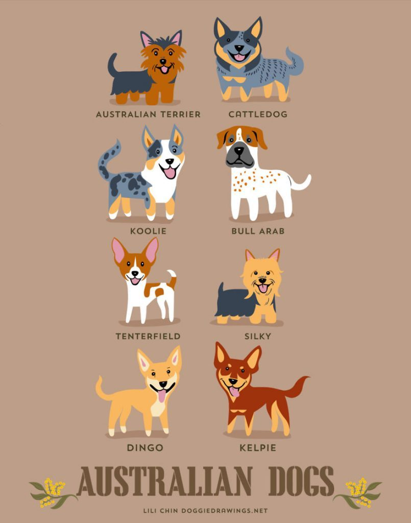 Dogs-Of-The-World-Cute-Poster-Series-Shows-The-Geographic-Origin-Of-Dog-Breeds2__australia