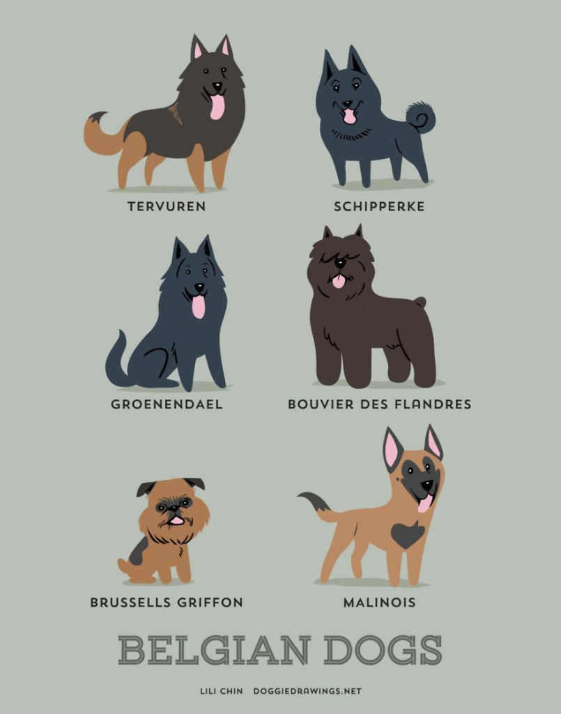 Dogs-Of-The-World-Cute-Poster-Series-Shows-The-Geographic-Origin-Of-Dog-Breeds3__belgas