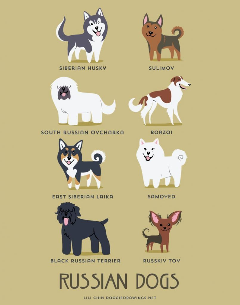 Dogs-Of-The-World-Cute-Poster-Series-Shows-The-Geographic-Origin-Of-Dog-Breeds9__rusia