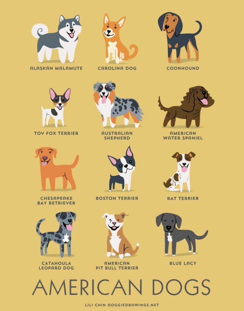 Dogs-Of-The-World-Cute-Poster-Series-Shows-The-Geographic-Origin-Of-Dog-Breeds__america