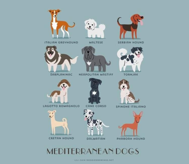 dogs-of-the-world-lili-chin-mediterraneo