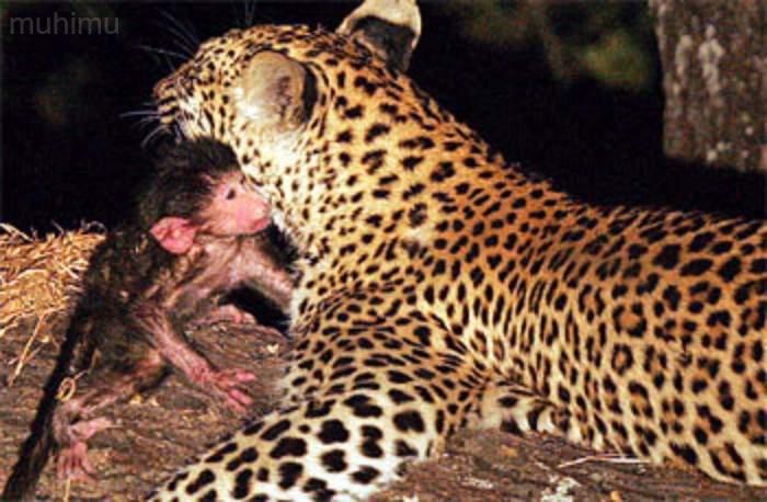 ¿Puede un animal sentir arrepentimiento o compasión? Los científicos por fin te dan la respuesta 14