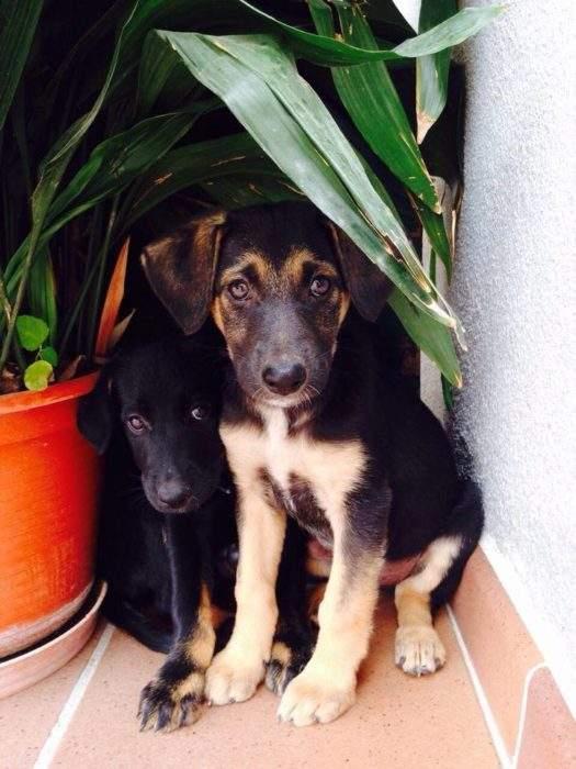 muhimu-adoptar-perro