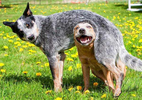 muhimu-dogs-playing-in-grass