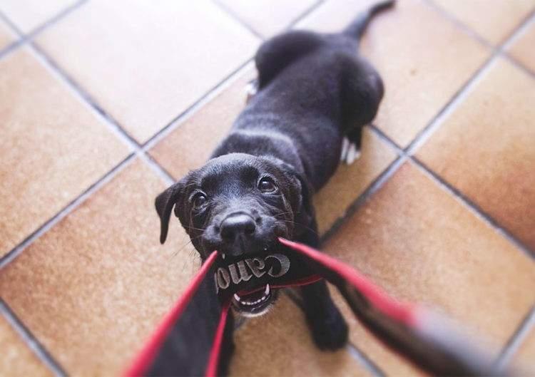 rescued-dog-kharma-10