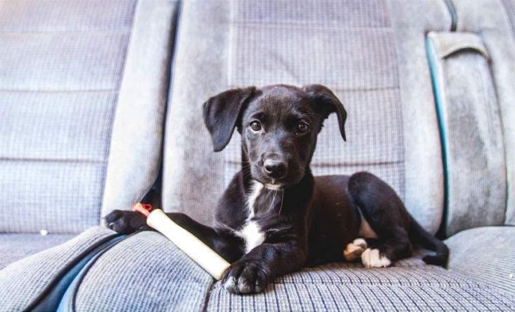 rescued-dog-kharma-11