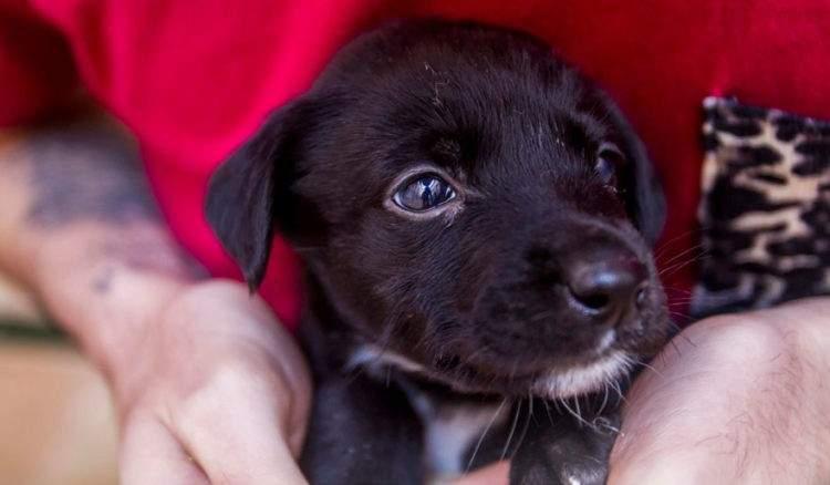 rescued-dog-kharma-18