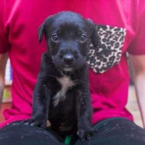 Una imagen vale más que mil palabras sobre el rescate de este cachorro. ¡Adopta y salva una vida! 15