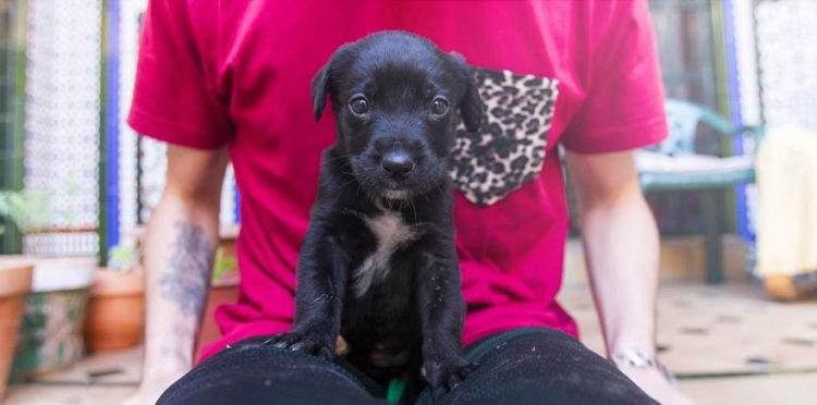 Una imagen vale más que mil palabras sobre el rescate de este cachorro. ¡Adopta y salva una vida! 14