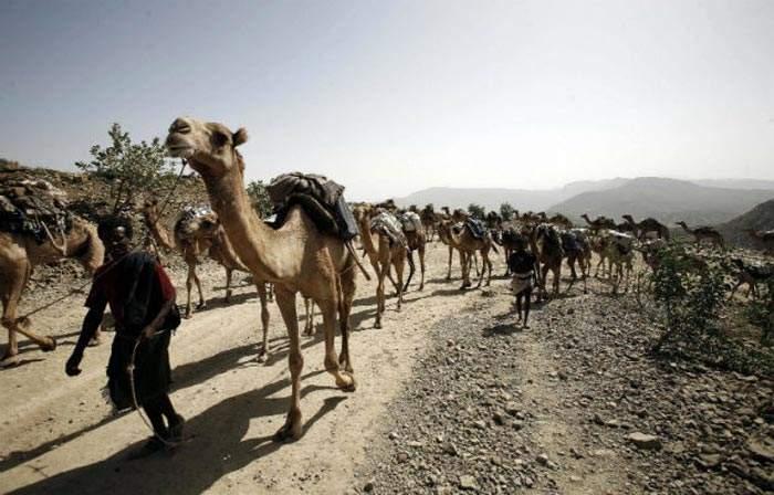 La continua lucha por la supervivencia de los Afar, los nómadas del desierto 14