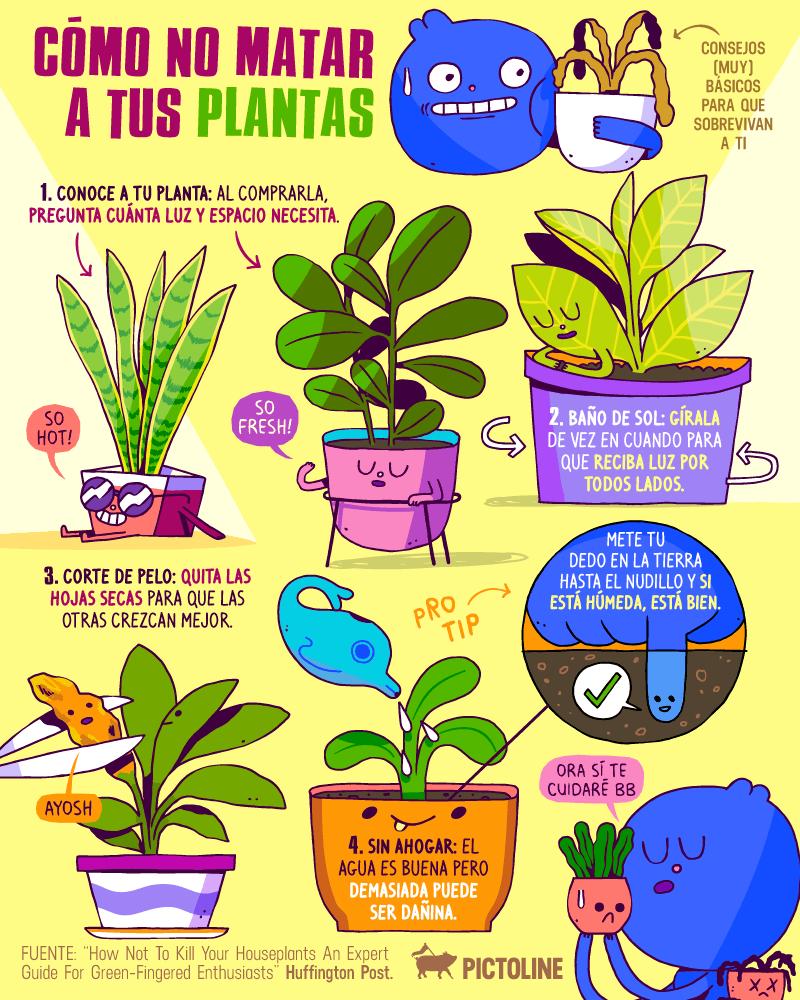 22 plantas medicinales que puedes cultivar en tu casa (aunque sea pequeña) 19