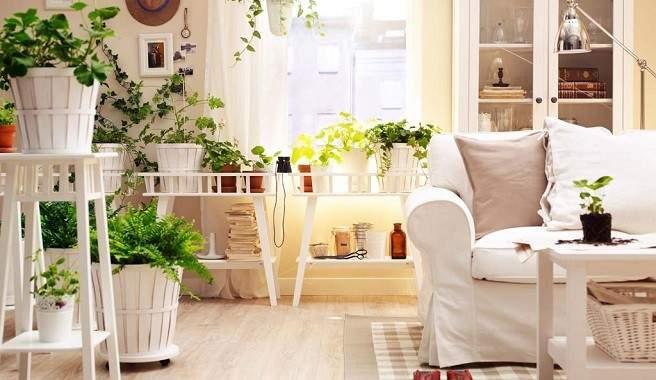 Como-decorar-una-casa-con-plantas-purificadoras