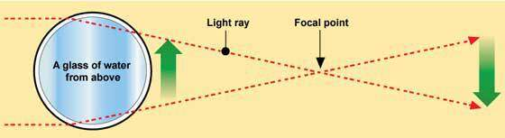 punto-focal-muhimu