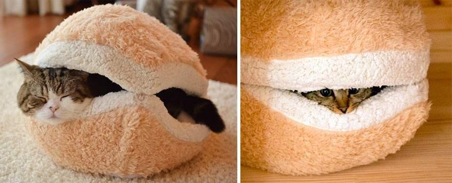 Excepcionales ideas de mobiliario doméstico para los amantes de los gatos 8