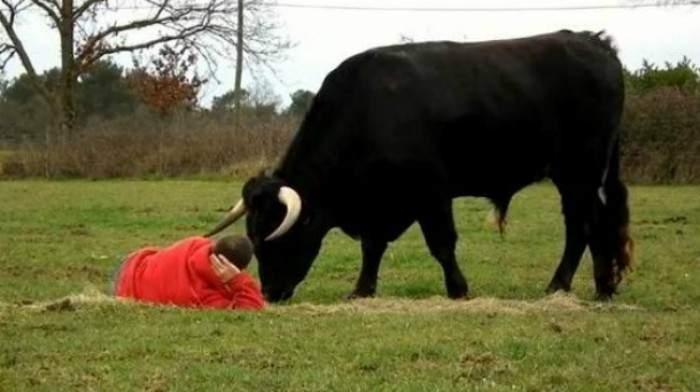 El NO tan agresivo toro de lidia. ¿Adivinarías su reacción? 10