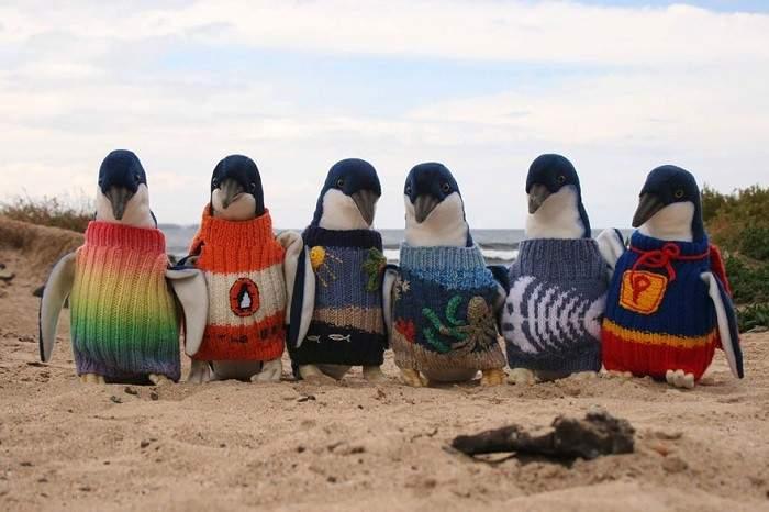 Con 109 años el hombre más viejo de Australia teje pequeños jerséis a pingüinos enfermos 16