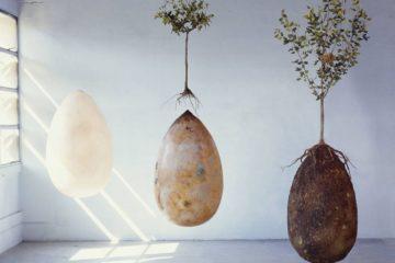Olvida los ataúdes, los entierros orgánicos convertirán a tus seres queridos en árboles 11