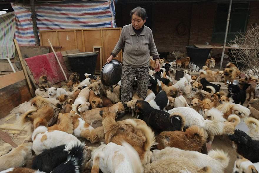 Cada día esta mujer china se despierta a las 4 de la mañana para alimentar a 1300 perros callejeros 6