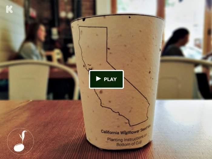 El primer vaso de café del mundo... ¡qué se transforma en planta! 2