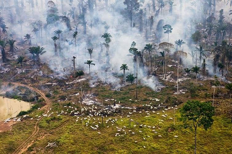 """Parte de la selva amazónica en Brasil, incendiado para ser """"reutilizado"""""""