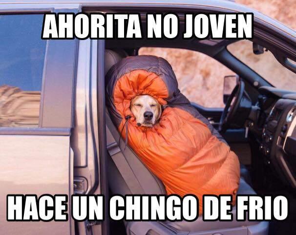 meme perros
