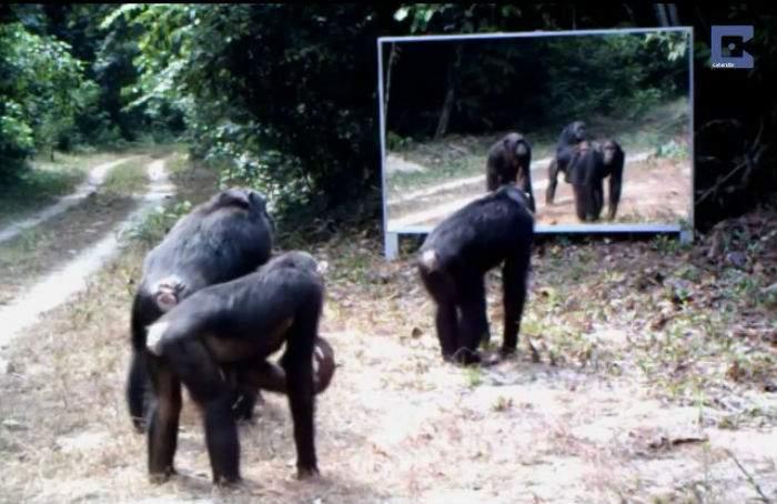 Colocan un espejo en la selva y as reaccionan los for Lo espejo 0450 el bosque