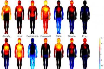 El primer mapa corporal de las emociones: un estudio revela cómo afectan las sensaciones a tu cuerpo 14