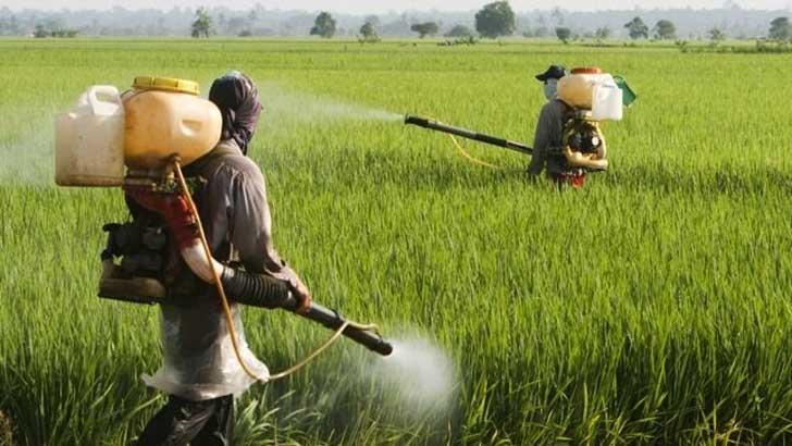 ¡Los granjeros indios usan la Coca Cola como pesticida! 6
