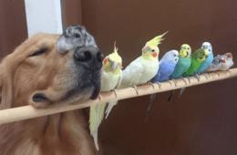 1 perro, 8 pájaros y 1 hámster son el grupo de amigos más curioso y tierno que vas a ver 10