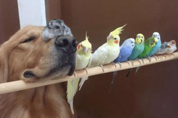 1 perro, 8 pájaros y 1 hámster son el grupo de amigos más curioso y tierno que vas a ver 14