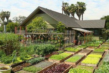 Descubre a la familia que produce 2.700 kg de comida al año en 370 m2. Mucho más de lo que necesita 12