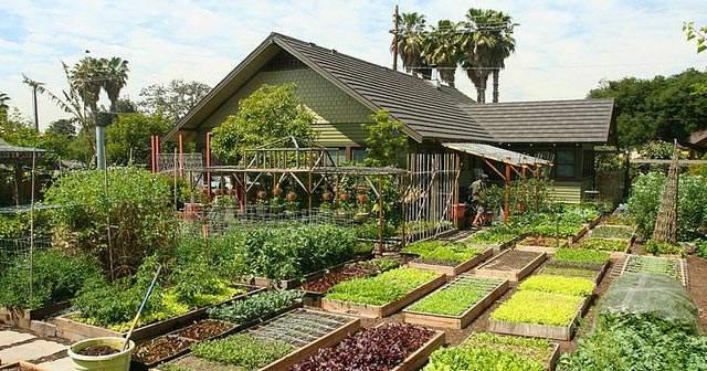 Descubre a la familia que produce 2.700 kg de comida al año en 370 m2. Mucho más de lo que necesita 2