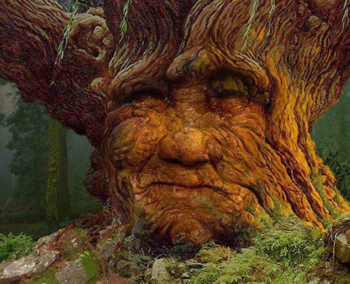 El hermoso cuento de 'El Viejo Árbol' y la moraleja que nos deja acerca de la ayuda mutua 1