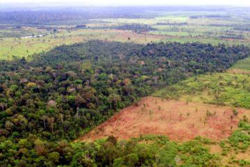 El aceite de palma, un cultivo exterminador que amenaza a los ecosistemas de medio mundo 20