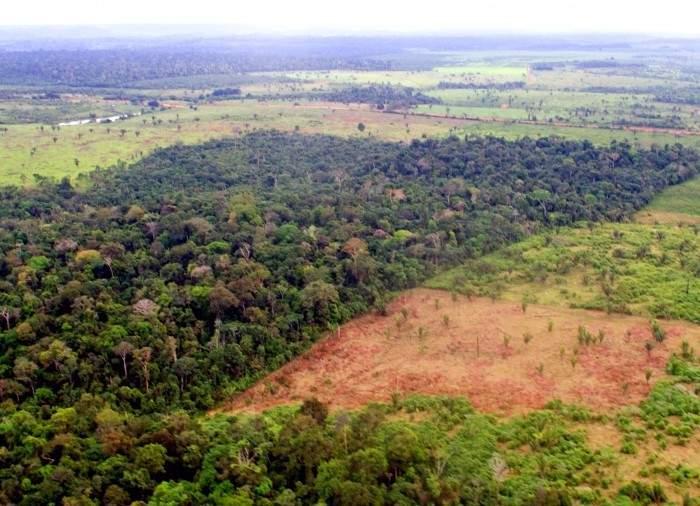 El aceite de palma, un cultivo exterminador que amenaza a los ecosistemas de medio mundo 1