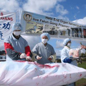organos-ilegal-china