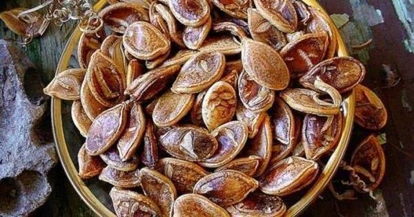 Hallan semillas de 800 años de antigüedad y deciden cultivarlas. Esto es lo que creció después… 7