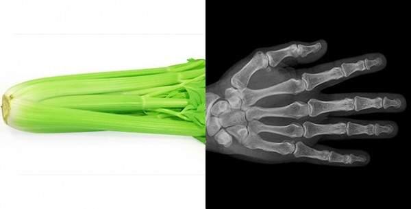 apio-huesos-FILEminimizer-e1449060965823