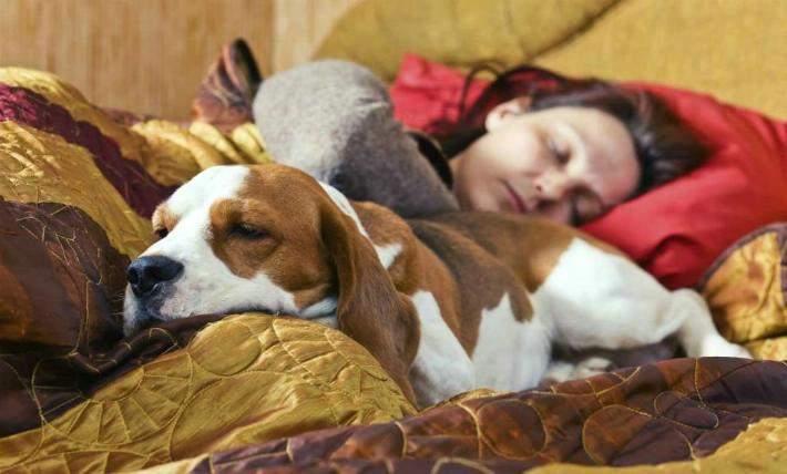 Un estudio revela lo que sucede si duermes con tu mascota. Tú decides si sigues haciéndolo 12