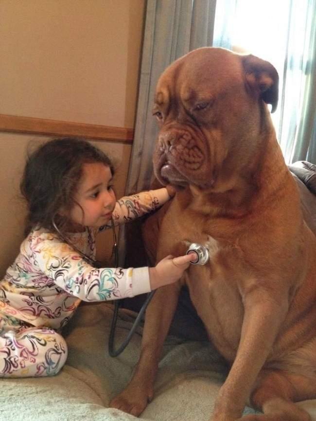553605-R3L8T8D-650-7172010-R3L8T8D-650-cute-big-dogs-and-babies-17